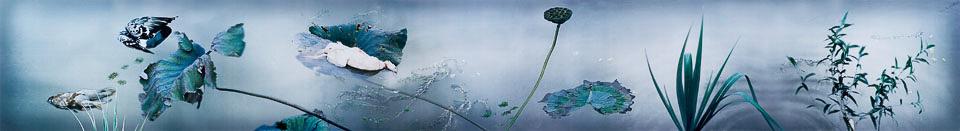我梦见徽宗时代的池塘晚秋(AP 1/3)