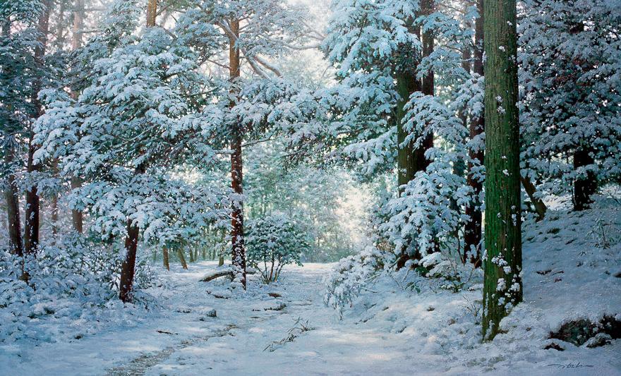 寂静的森林 No.56